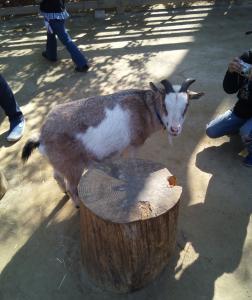 智光山公園8